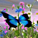 Hidden Stars-Butterflies